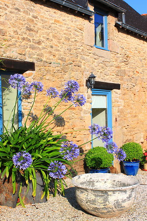 Rates & Availability . agapanthus-front